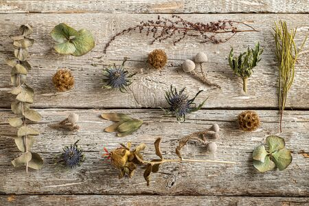 Various dried flowers on a wooden table.