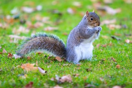 paciencia: Tail, ardilla, animales, campo, verde, velocidad, Patience