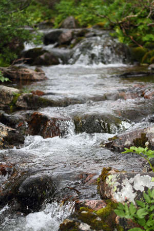 stepping: stream rushing makes a small waterfall with rocks and vegetation