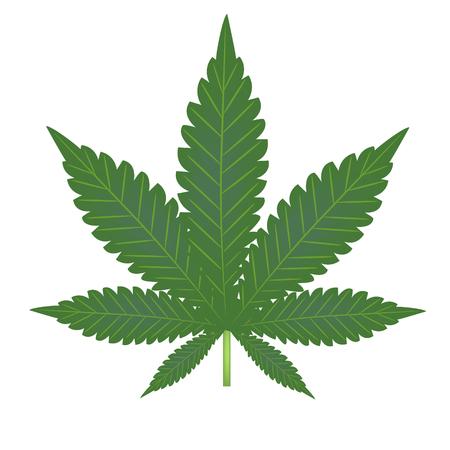 weeds: Marijuana. Sheet hemp closeup. Vector illustration