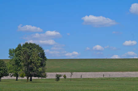 One large tree and several smaller trees against a green and white lined horizon, room for text  photo