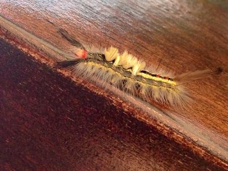 caterpillar: Oruga
