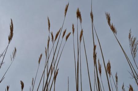 towering: Towering Grass