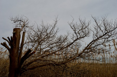 unoccupied: Bare Branches Stock Photo