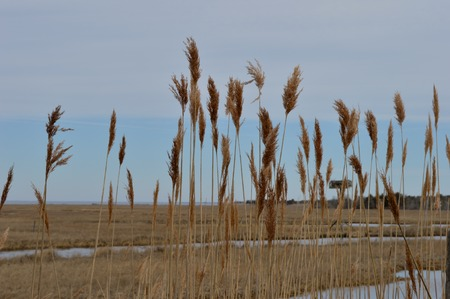 View from Behind the Marsh Grass