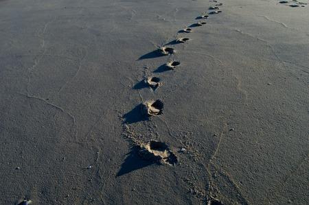 Footprints on the beach Фото со стока