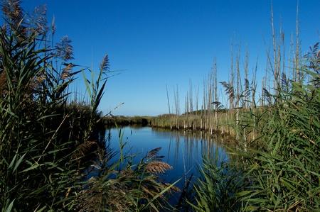 Wetlands at Cattus Island Park, Jersey Shore Stock Photo