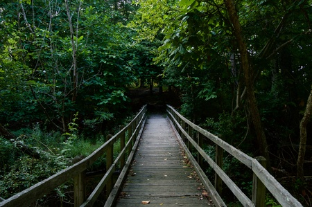 Wooden Bridge Leading into the Wood at Allaire State Park, New Jersey