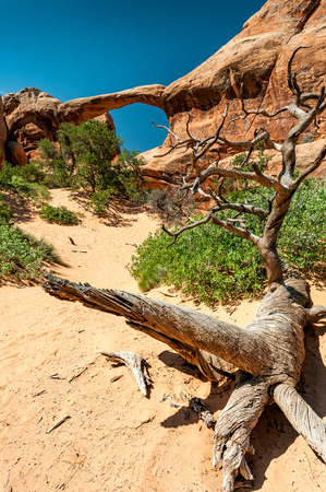 Deadwood on the sand in front Double O Arch in Arches National Park