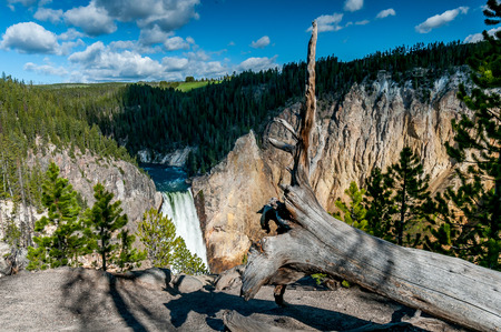 The Lower Falls waterfall of the Yellowstone River behind the trunk of a dead tree