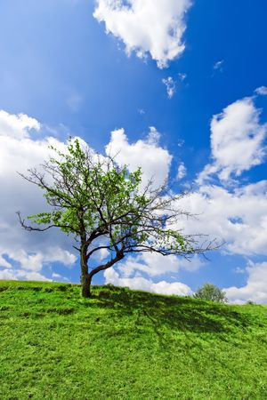 Lonely apple tree with green leaves growing on green hill under cloudy blue sky Stock Photo - 6032062