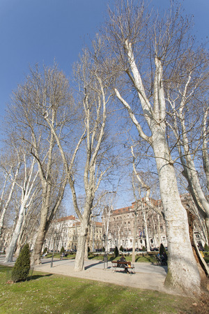 ZAGREB, CROATIA - MARCH 2015: Zrinjevac Park with beautiful tall trees on a sunny winter morning in the heart of Zagreb. Editorial