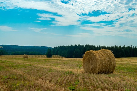 Hay and straw bales in the end of summer
