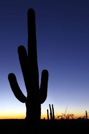Sunset with silhouetted saguaro cactus in Saguaro National Park Stock Photo - 6615328