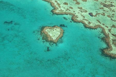 corales marinos: Vista del Corazón de coral, una formación de coral único situado en la Gran Barrera de Coral, Queensland, Australia