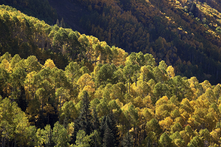 Mountainside view of gold and green aspens in sunshine and shadow on Last Dollar Road near Telluride, Colorado