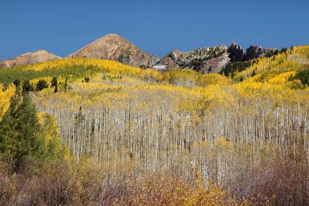 Golden aspens on mountainside along Kebler Pass near Crested Butte, Colorado Reklamní fotografie