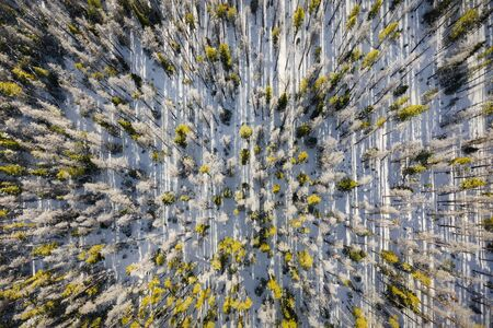 Aerial view from above shooting straight down into trees along a mountainside in the Gore Range area of Summit County near Silverthorne, Colorado. Reklamní fotografie