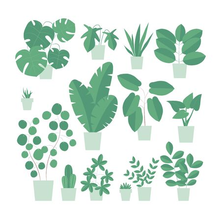 Vector isolated illustration of an indoor plants. Home interior. Houseplants set in a flat design style. Home plants in a modern style.
