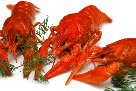 fluvial: Cooked crayfish, russian delicacy for beer