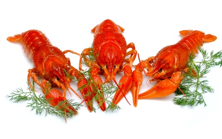 fluvial: Closeup crayfish, russian delicacy with beer