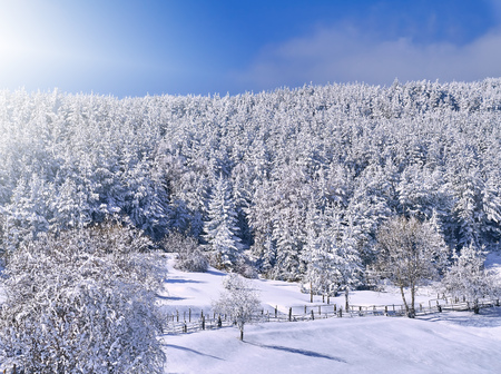 Landscape of mountains against the blue sky and white clouds. A bright winter picture. Pine forest in winter. The sun and sunlight make their way through tall trees