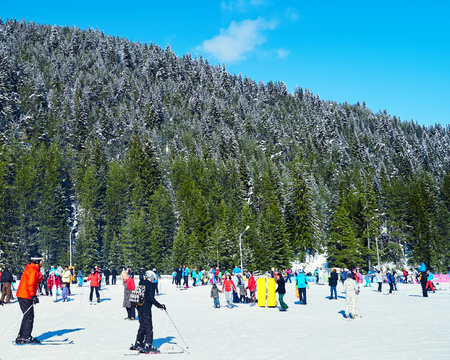 Mountain. Skiers climbing on the piste. Ski resort. Ski track. People ski on snow in the winter. Pine forest