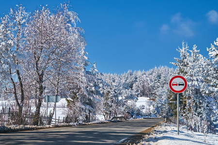 Winter picture. The transport road. Road warning sign. Pine forest. Coniferous trees covered with snow