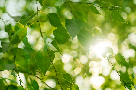 Sun rays make their way through the green summer foliage in the city park. Bright abstract background ideal for any design Imagens