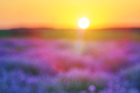 Blurred bright lavender field at sunset. Bright abstract background ideal for any design. Basic background for design