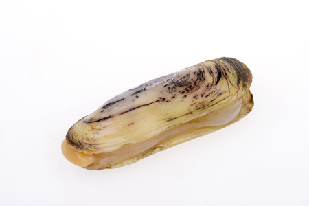 Razor clam isolated on a white background  Standard-Bild