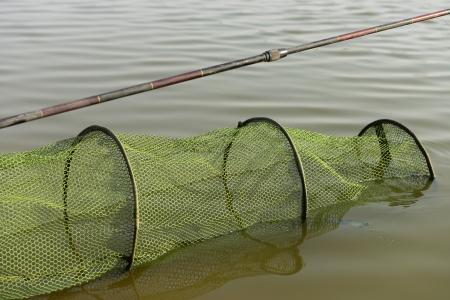 elasticidad: La varilla en el agua y los peces Foto de archivo