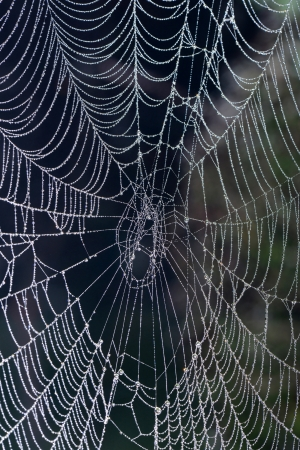 Spider web features in northern China in the morning   Stock Photo