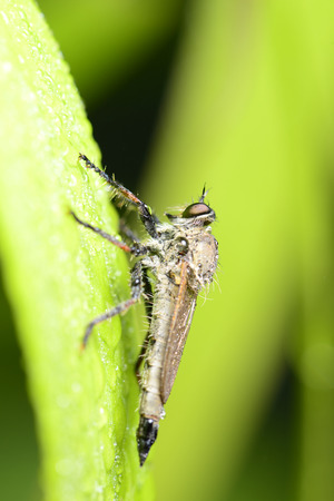 gadfly: A gadfly close-ups of worm isolated on the green leaves Stock Photo