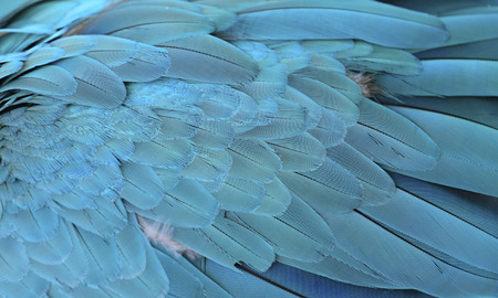 features: Beautiful parrot feathers features