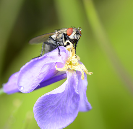 A fly lie prone on the flower close-up photo