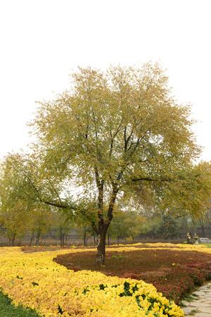 vigorous: Vigorous growth of a big tree in the garden Stock Photo