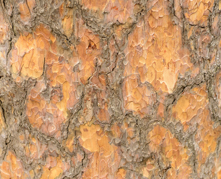features: The tree of the skin texture features