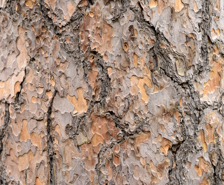 desiccation: The bark of desiccation local texture features
