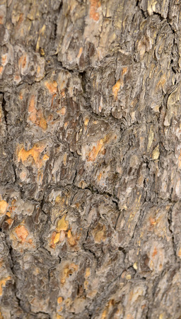 features: The bark of trees texture features Stock Photo