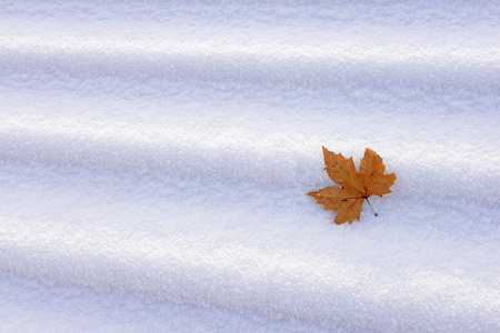isolation: A leaf on the steps of isolation in the snow