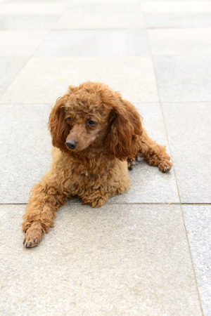 sprawled: A sprawled puppy in the park