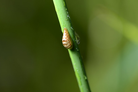 A small insect stem lying on the grass