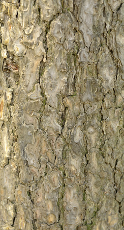 The way to the fruit tree bark texture features photo