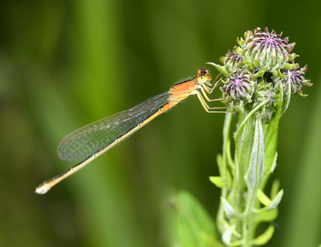 A dragonfly on the flowers photo