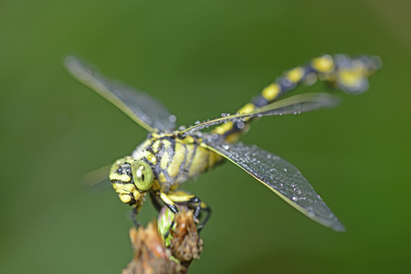 A dragonfly on the green plants, close-up photo