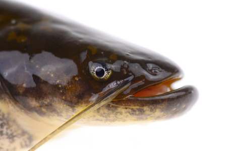 fish head: A fish head features Stock Photo