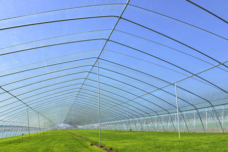 The cultivation of rice seedlings plastic greenhouses