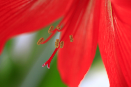 Close-up photos of the stamens 免版税图像