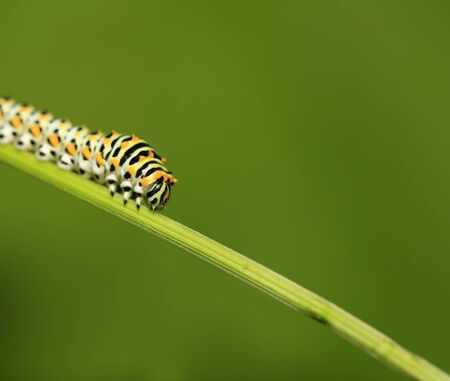 A caterpillar is on the green leaves Imagens